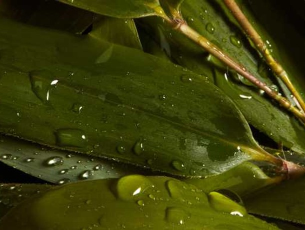 Close up of dewy bamboo leaf, one of the hero ingredients in weDo's products